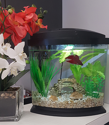 photograph of Old North physiotherapy pt Health's pet fish