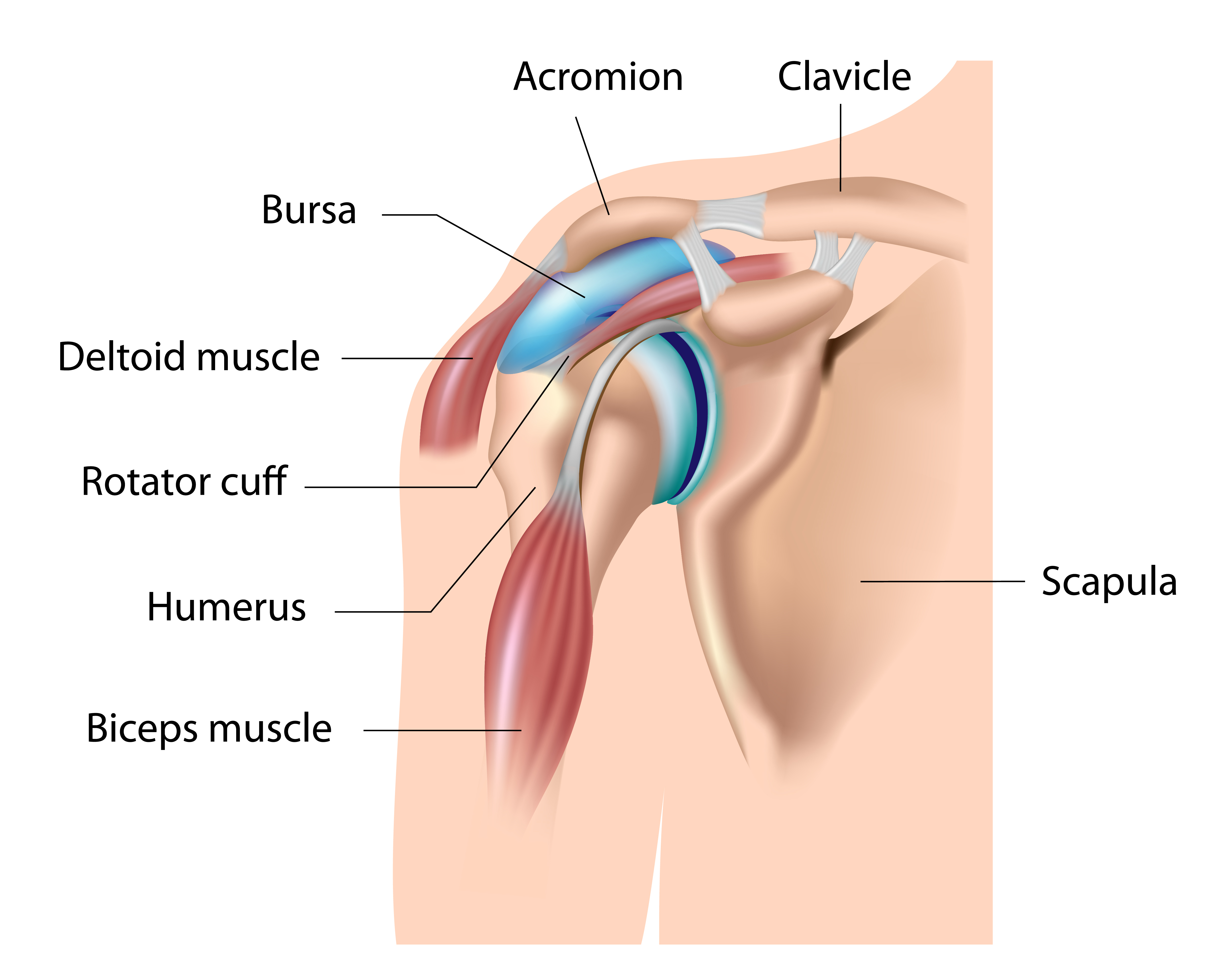Rotator Cuff Injury Symptoms Diagnosis Treatments