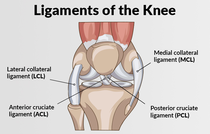 medical illustration of a knee showing the ACL, PCL, MCL, LCL ligaments
