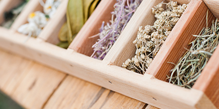 photograph of herbs in a tray